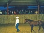 horse training (16)