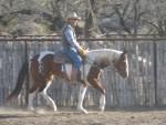 horse training (20)