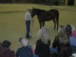 horse training (19)