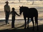 horse training (17)