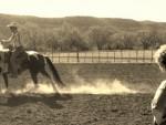 horse-training (4)