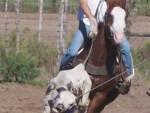 horse-training (1)