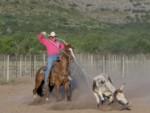 horse-training (10)