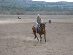 horse-training (12)