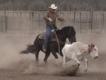 horse-training (2)