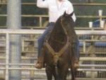 horse-training (5)