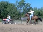 horse-training (6)
