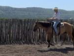 horse-training (7)